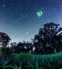 fireflies and heart