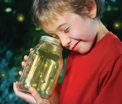 firefly boy looks in jar